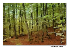 La Fageda Etérea - by Don_Gato (LoFi Photography)