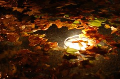underwater lamp, leaves and bubbles (ManuelChao [ MoMoChao / ManuChao]) Tags: light verde fall hoja luz water lamp leaves movement agua bath underwater shadows shine autum fuente otoo bombilla fount marchito bombillo