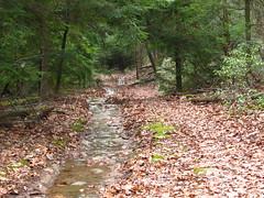 img 7235 (cshontz) Tags: forest woods pennsylvania baldeagle trail dirtroad stateforest baldeaglestateforest drivabletrail