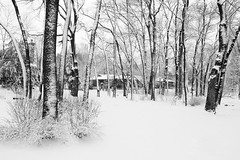 House in the woods (Mingfong) Tags: trees winter blackandwhite bw white snow tree 20d monochrome wisconsin canon geotagged woods loneliness quiet snowy postcard peaceful story highland madison albumcover highlandave stories   1740l     danecounty   mingfong exploretop20   musicflyer  mingfongjan   artbrochure  sketchoflight mingfongphotography