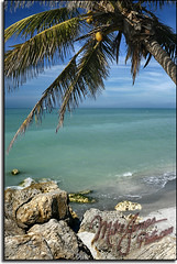 Sanibel Beach (MikeJonesPhoto) Tags: ocean sea gulfofmexico nature water palms landscape bay aqua florida scenic palmtrees tropical sanibelisland professionalphotographer captivaisland oceanscape mikejonesphoto