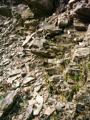 I am a rock (dididumm) Tags: rock stone slate fels stein schiefer