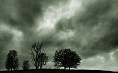 Four Horsemen (bikeracer) Tags: trees sky blackandwhite tree clouds saveme2 deleteme10 foreboding menacing apocalyptic interestingness233 i500 chromatoned explore28nov06