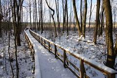 """Ścieżka przyrodnicza """"Dąb Dominik"""" - Poleski Park Narodowy (arkbol) Tags: lubelskie lubelszczyzna polesie poleski park narodowy jezioro moszne lake"""