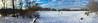 Springhurst Park (lezumbalaberenjena) Tags: winter hiver invierno frio cold froid nieve niege snow white blanco blanca blanc blanche ottawa rideau river trail 2016 december diciembre decembre dog perro chien chiot boston terrier bully