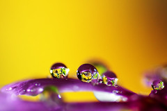 Inner Garden (kktp_) Tags: light flower macro water yellow d50 droplets nikon bravo purple searchthebest bokeh refraction magicdonkey outstandingshots specnature tamronspaf90mmf28dimacro11 abigfave anawesomeshot flickrplatinum irresistiblebeauty