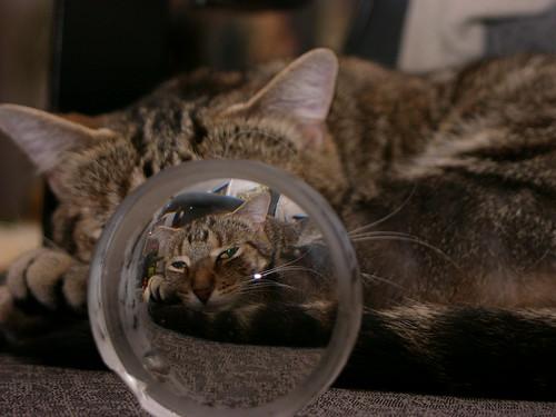 Katzenfutter unter der Lupe