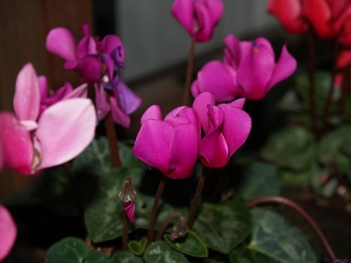 I fiori e le piante di novembre giardino regali cerimonie for Cosa piantare a dicembre