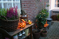 I Know it's Still Hot But I'm Not Longer Waiting for Autumn (yvestown) Tags: autumn home halloween garden pumpkins