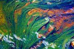 Verde en el Tinto (pericoterrades) Tags: riotinto huelva 2006 niebla algas rotinto pericoterrades p1f1 marikedadas marteenlatierra proyectosnorkle marsattheearth naturemasterclass