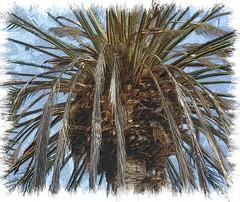 palm tree (susanmedgerton) Tags: tree loveit clone ecosystem jasqpaintproshop hourpostprocessingpool