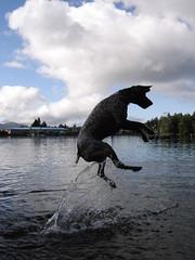 flying fish (waltimar) Tags: