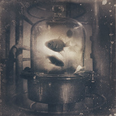 The Observatory (aka: The Dialogue) (panic-embryo) Tags: fish glass sepia photomanipulation dark topf50 bravo factory moody quality pipes moth dream eerie topf300 topf150 visitor topf100 topf200 dreamscape lookingout topf400 topf500 fairytalesdarkly artlibre graphicnovelexperiments obstaculum piscel featuredimagedaskabinett 2bdasest