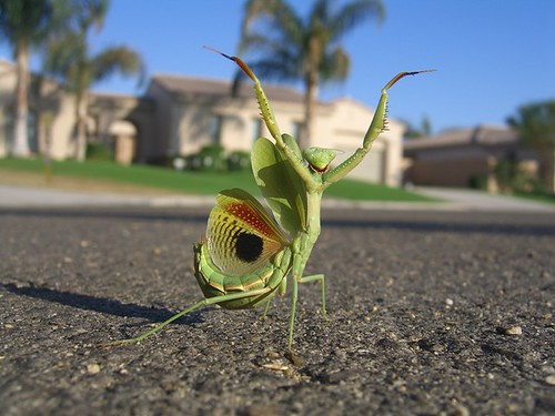 Mantis | Flickr - Photo Sharing!