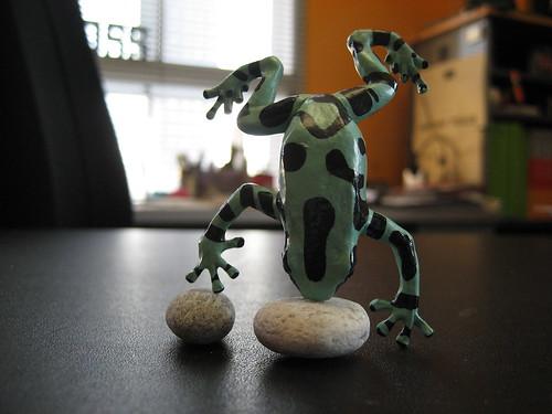 acrobat poison dart frog