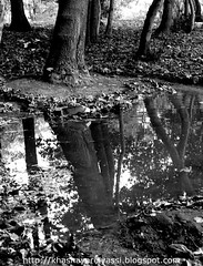 Autumn (Please! Don't Smile.) Tags: autumn trees bw white black cold reflection tree water canon season mirror evening persian asia iran persia powershot east reflect jungle blogspot iranian  saman pro1 vivaldi irani   khashayar midlle elyassi  shahrekord