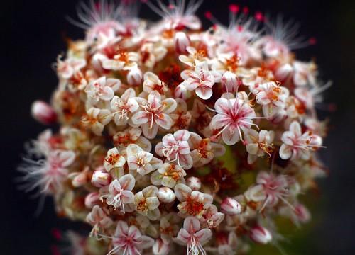 Very Tiny Bouquet