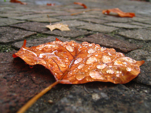Best-of des articles de Novembre sur Toile Filante