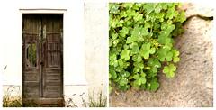 green (..dri..) Tags: door verde green mexico puerta shamrocks monterrey treboles diptico villadesantiago