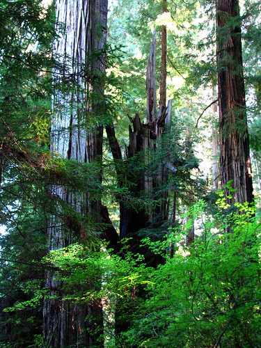 California Redwoods, Smith River