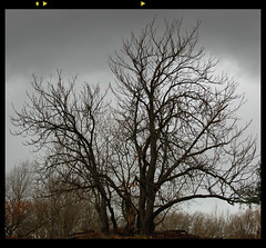 Tree in Mordor (j_wijnands) Tags: autumn sky tree fall d50 dark amsterdamse waterleidingduinen vogelezang pleasecontactmeifyouwanttouseapicturejeroenwijnandsatgmailcom