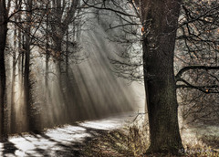 Morning Sunlight (Stevacek) Tags: road wood light shadow sun sunlight tree les forest d50 geotagged nikon lane czechrepublic rays strom hdr ceskarepublika cesta svetlo slunce stin twtme paprsky cesticka geo:lat=5051628062821064 geo:lon=1521085917422345