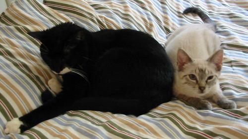 Mooch & Scout, Caught Cuddling