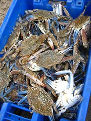 "crabs • <a style=""font-size:0.8em;"" href=""http://www.flickr.com/photos/70272381@N00/304630351/"" target=""_blank"">View on Flickr</a>"
