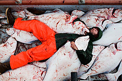 melaying (coreyfishes) Tags: ocean sea snow color ice dutch weather norway alaska danger harbor photo fishing fisherman king arnold picture wave crab corey commercial catch kingcrab discovery harsh beringsea crabbing 2007 rollo bering snowcrab opilio deadliest deadliestcatch coreyfishes