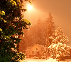 The night before--- (tollen) Tags: christmas trees winter snow storm ilovenature evening bravo advent snowing neighbors merrychristmas magicdonkey outstandingshots streetlite abigfave outstandingshot anawesomeshot parkinbackground myhinoki impressedbeauty frhwofavs