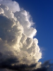 Escape - Cumulus congestus (s0ulsurfing) Tags: blue sky cloud white bird topf25 beautiful birds silhouette tag3 taggedout clouds contrast wonderful dark amazing cool fantastic topf50 perfect tag2 skies tag1 escape power nimbus magic awesome explosion flight silhouettes dramatic fluffy stormy 2006 100v10f massive tiny isleofwight cumulus stunning excellent huge tall fabulous crows drama incredible nube magnificent wight meteorology nephology cumulonimbus updraft staggering billowy helluva precipitous cumuluscongestus instantfave lovephotography specnature s0ulsurfing abigfave congestus p1f1 123f50 30faves30comments300views cloudology aplusphoto cumulusology