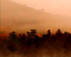 Mountain mist - by Lida Rose