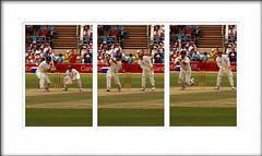 Cricket Triptych - by ~Prescott