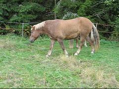 villekesa5 (valonsa) Tags: horse hevoset hevonen hst