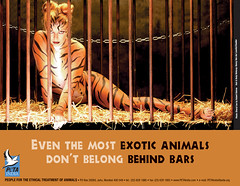 PETA India (Sheryl Lee)