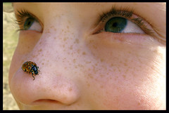spring on the nose (panta rhei.) Tags: face nose beetle explore ladybug crawling nase marienkfer top20kidhallfame