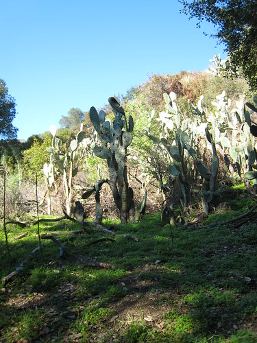 We also saw cacti surrounded by short green grass.