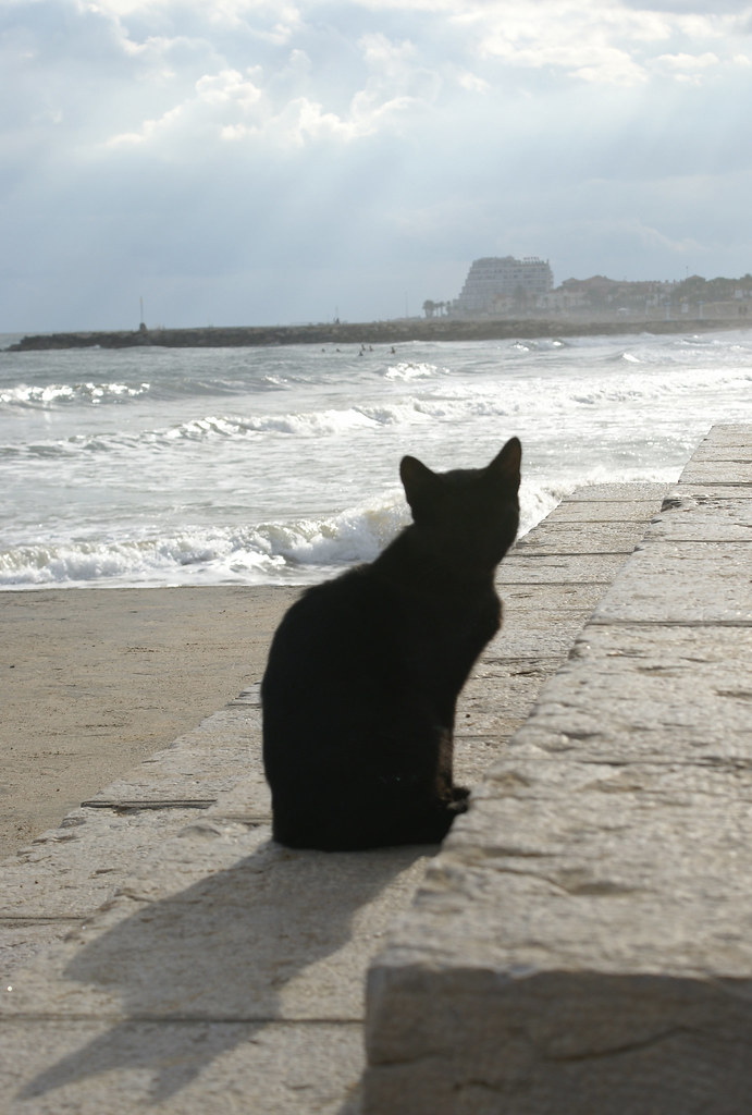 Cat on the Beach 2