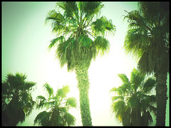 palm trees (jena ardell) Tags: california sun green beach sunshine surreal sunny palmtrees ventura jenaardell
