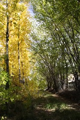 Fall Colors (JoelDeluxe) Tags: newmexico fall colores september nm joeldeluxe southvalley greenchile