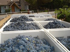 5500 lbs of Cab Sav (Scott Holmes) Tags: