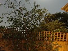 Backyard at Night - 60sec exposure (avlxyz) Tags: longexposure night backyard casio exilim silverbirch z850