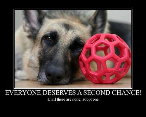 Great dogs don't have to cost hundreds or thousands of dollars...there are plenty of perfectly good ones out there for free!