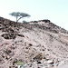 Djibouti Countryside 2
