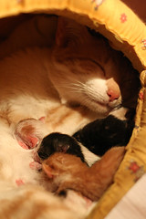 They are born!!!! (fofurasfelinas) Tags: cats topf25 kitten gatos neko bo fofurasfelinas cc400 catphotography felinephotography gianeportal furryfelines fotografiadegatos fotografiafelina