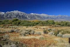 Cerro Gordo Buttermilk 199 (Steve Perdue) Tags: fallcolor 395 easternsierra