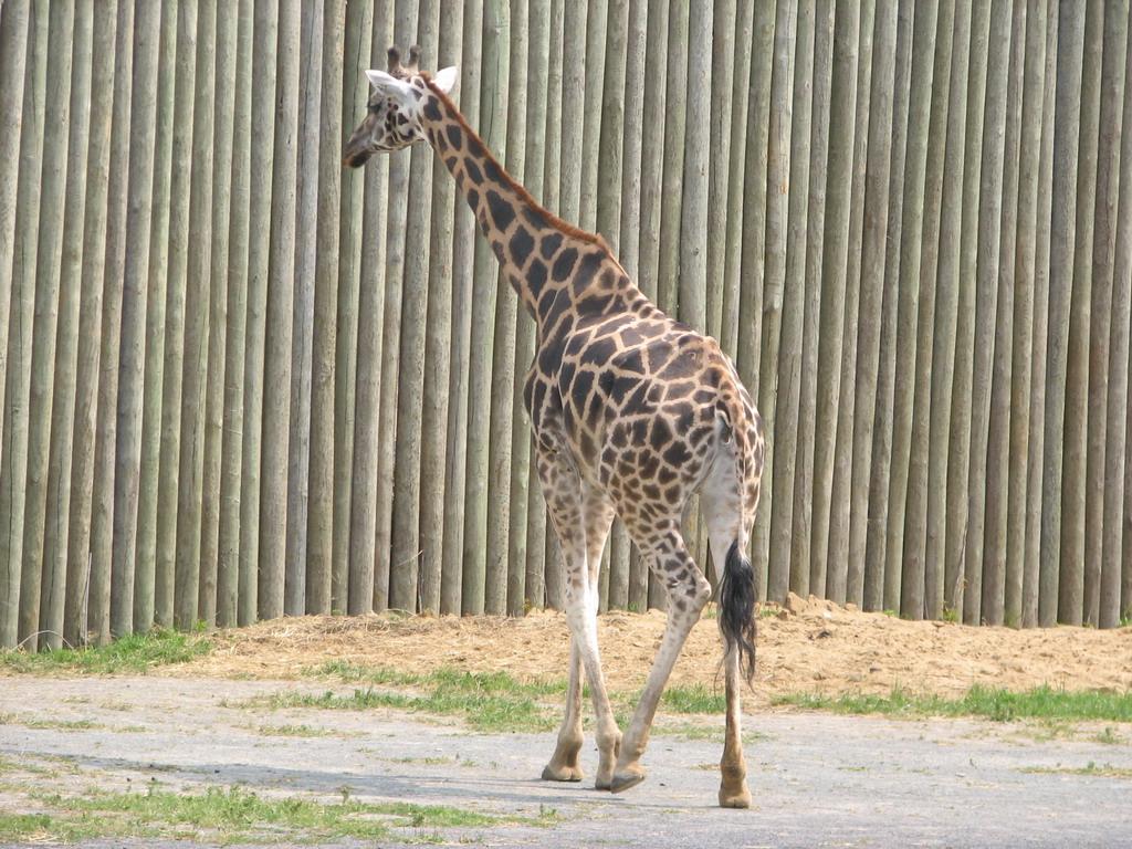Zoo Granby Août 2006
