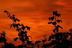 Close of Play (Peter you've lost the news) Tags: sunset sky orange black nature silhouette ilovenature wiltshire calendarshot