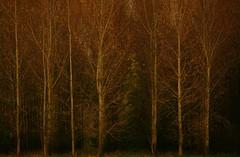 Hidden (Harry Mijland) Tags: autumn trees holland nature bomen herfst nederland natuur nl alpha a100 dearharry harrymijland