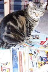 Planning her shopping (Joseph & Sam's Mom) Tags: cat newspapers guelph sally flyers